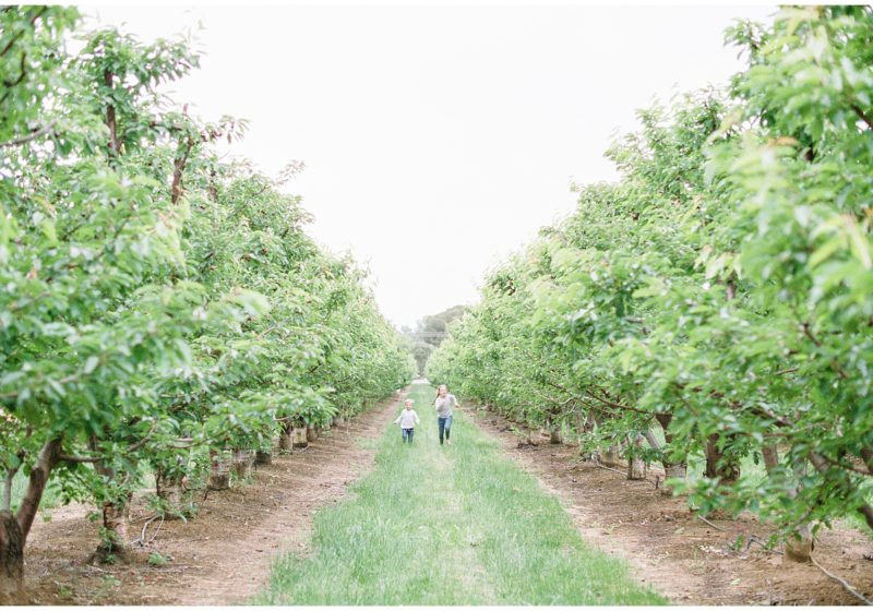 Bay Area film photography u-pick cherries orchard